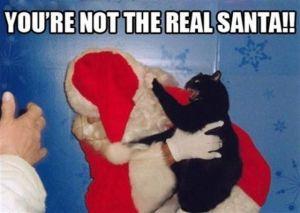santa vs cat